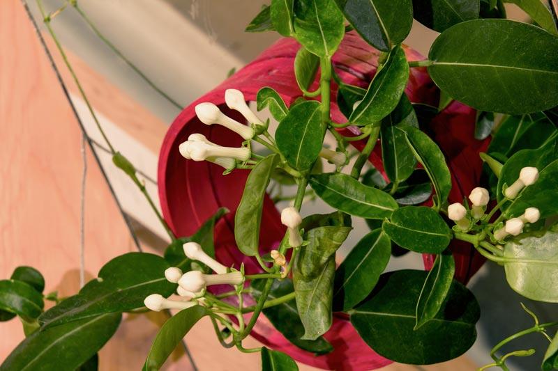 hallmakwanda_magnumopus_fleurs